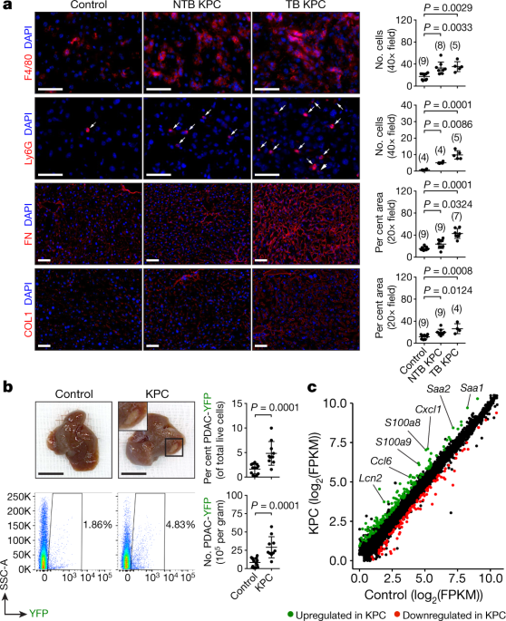 Hepatocytes direct the formation of a pro-metastatic niche in the liver