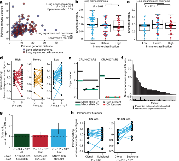 Neoantigen-directed immune escape in lung cancer evolution