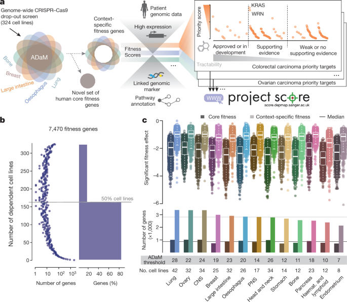 Prioritization of cancer therapeutic targets using CRISPR–Cas9