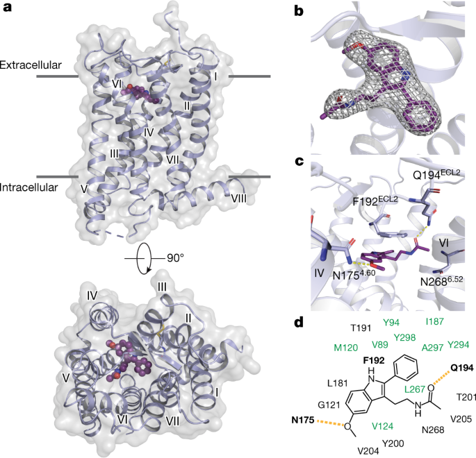 XFEL structures of the human MT<sub>2</sub> melatonin receptor reveal the basis of subtype selectivity