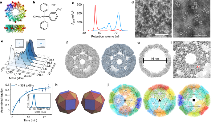 An ultra-stable gold-coordinated protein cage displaying reversible