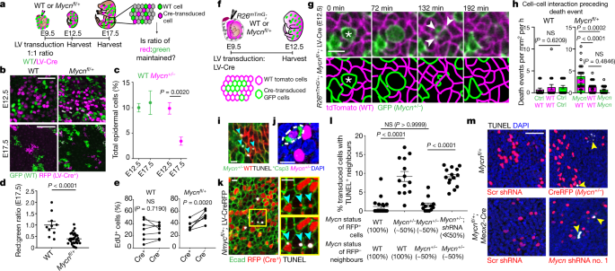 Distinct modes of cell competition shape mammalian tissue