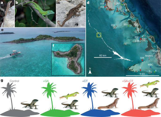 Predator-induced collapse of niche structure and species coexistence