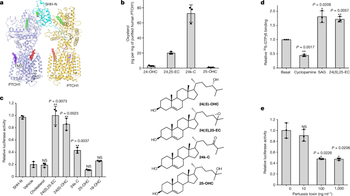 Cryo-EM structure of oxysterol-bound human Smoothened coupled to a heterotrimeric Gi