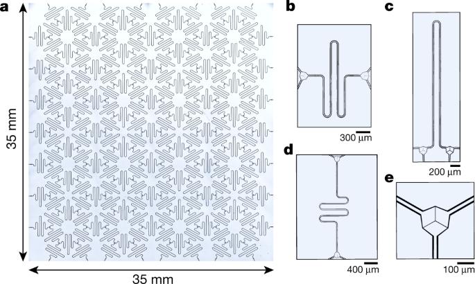 Hyperbolic lattices in circuit quantum electrodynamics | Nature