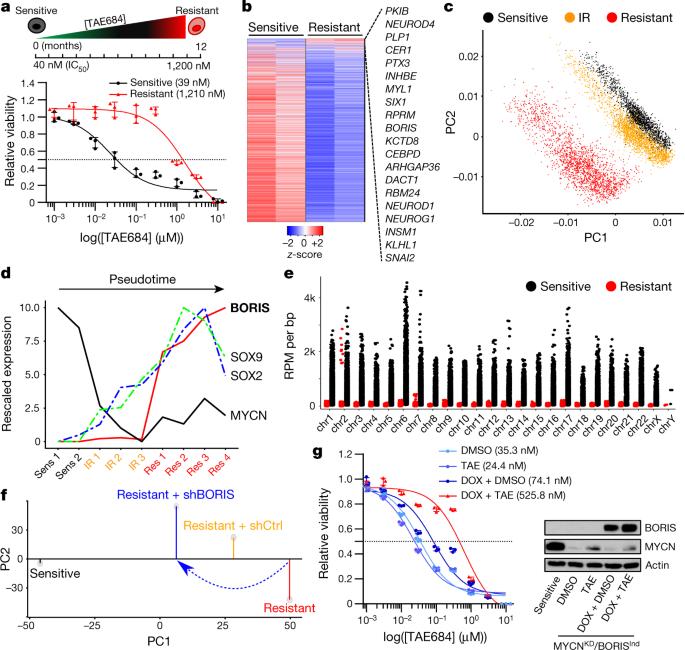 BORIS promotes chromatin regulatory interactions in treatment