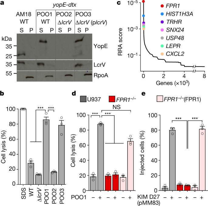 FPR1 is the plague receptor on host immune cells