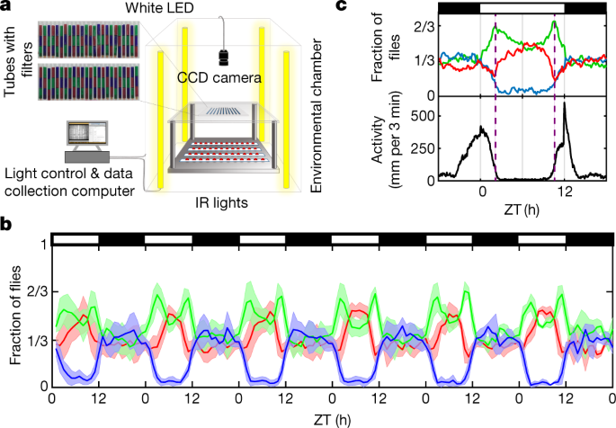 Daytime colour preference in Drosophila depends on the circadian clock and TRP channels