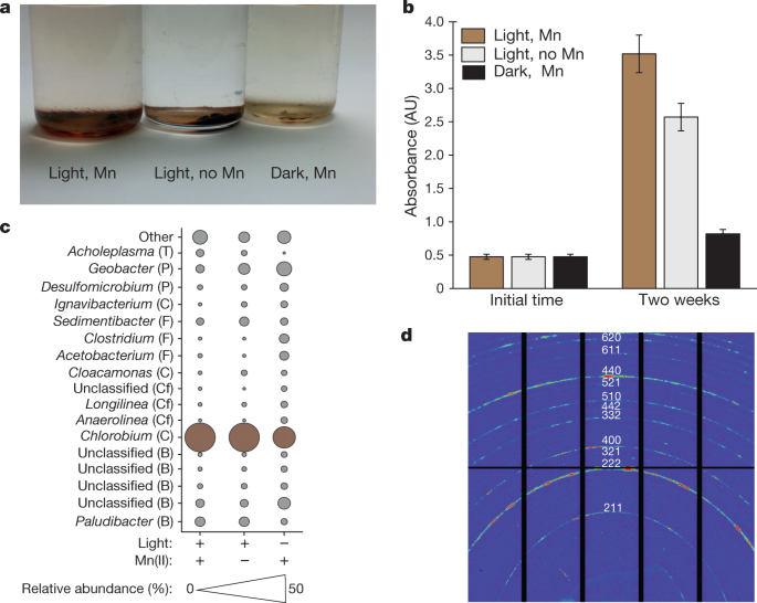 Light-driven anaerobic microbial oxidation of manganese
