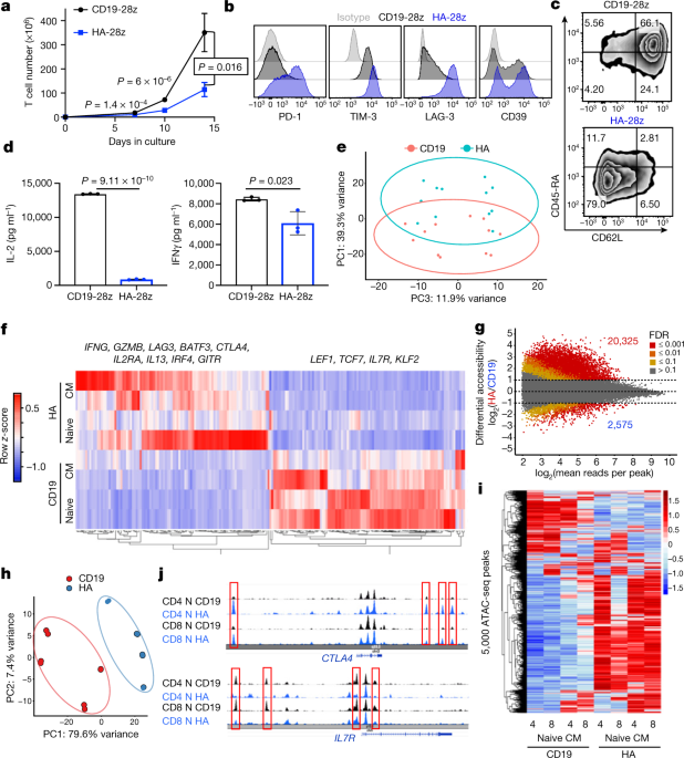 c-Jun overexpression in CAR T cells induces exhaustion resistance