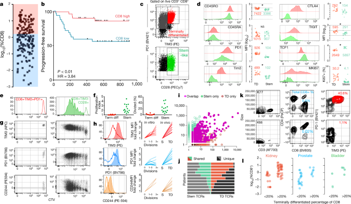 An intra-tumoral niche maintains and differentiates stem-like CD8 T cells