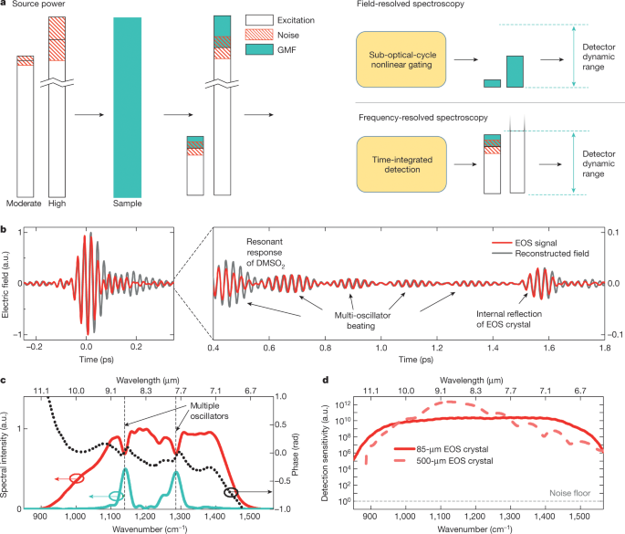 Field-resolved infrared spectroscopy of biological systems