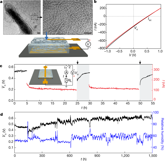 Power generation from ambient humidity using protein nanowires