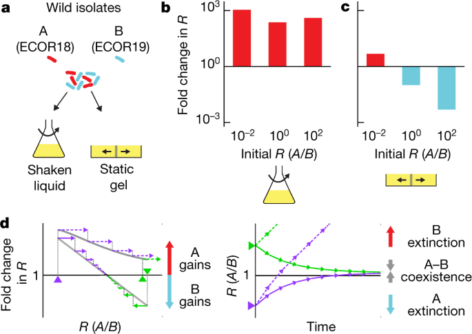 Bacterial coexistence driven by motility and spatial competition