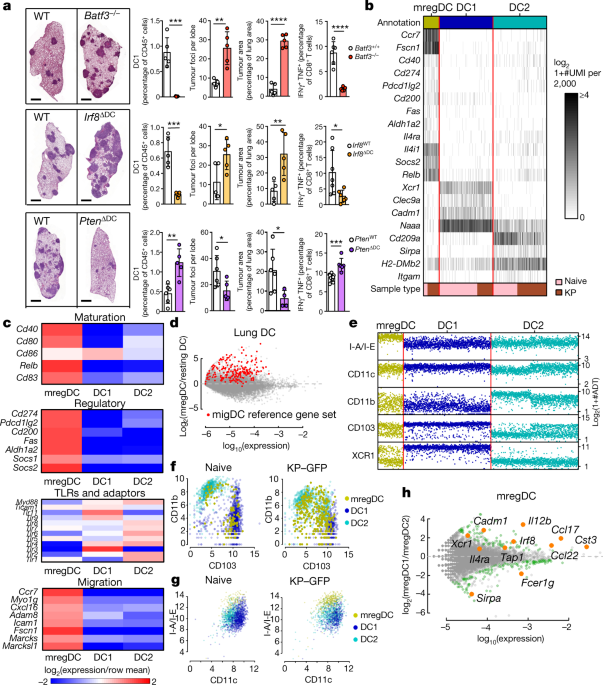 A conserved dendritic-cell regulatory program limits antitumour immunity