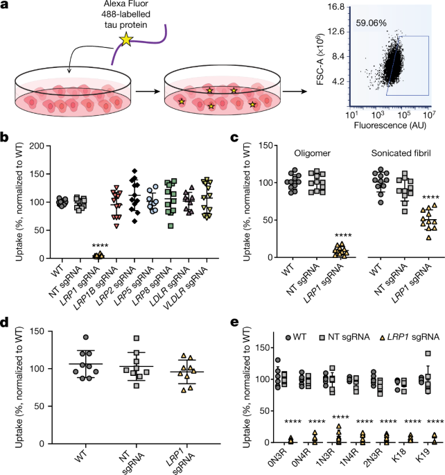 LRP1 is a master regulator of tau uptake and spread