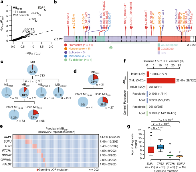 Germline Elongator mutations in Sonic Hedgehog medulloblastoma - Nature.com