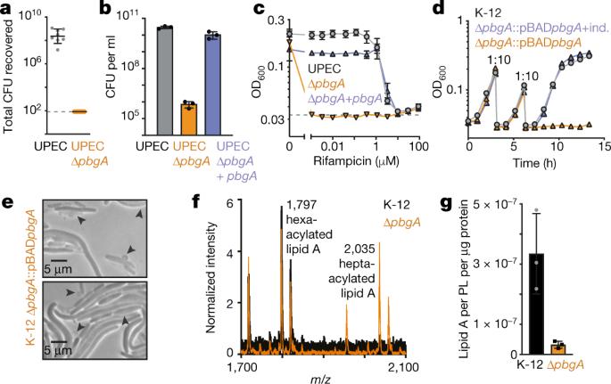 Structure of the essential inner membrane lipopolysaccharidePbgA complex