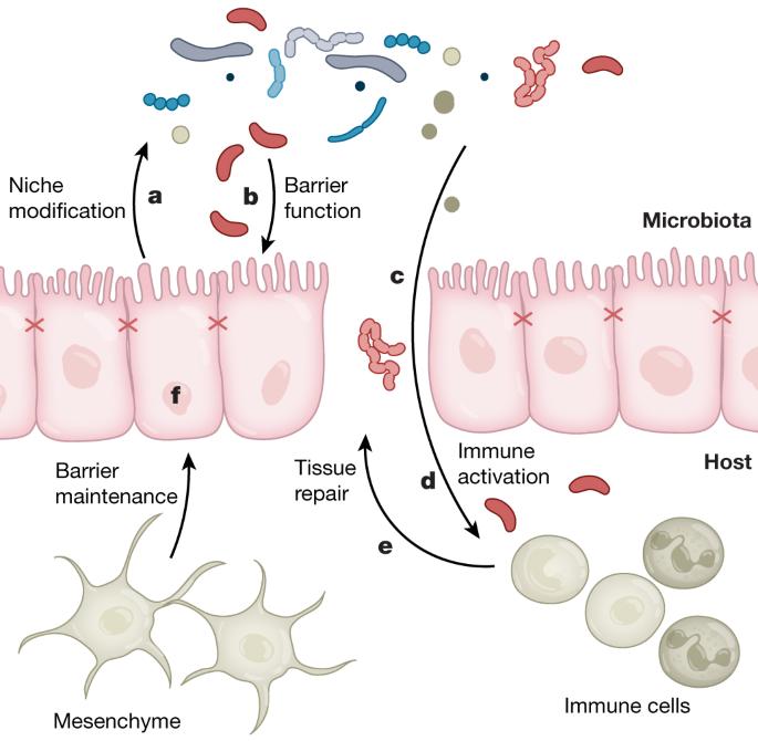 cancer epitelial de colon specii parazite de platyhelminthes