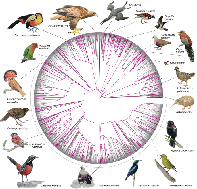 Dense sampling of bird diversity increases power of comparative genomics