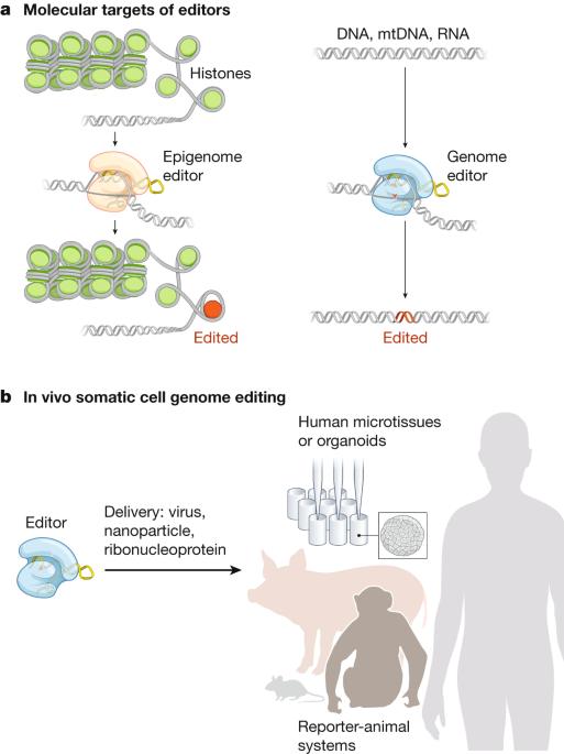 The NIH Somatic Cell Genome Editing program - Nature.com