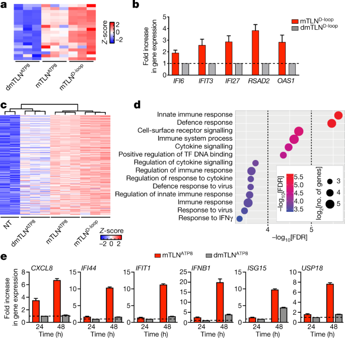 Nuclear sensing of breaks in mitochondrial DNA enhances immune surveillance