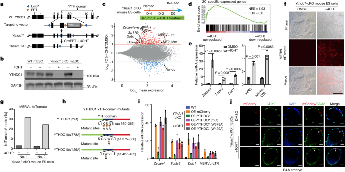 The RNA m6A reader YTHDC1 silences retrotransposons and guards ES cell identity