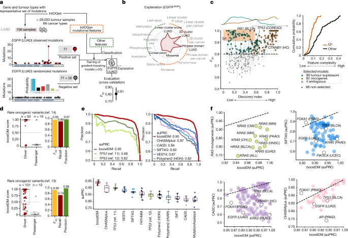 In silico saturation mutagenesis of cancer genes