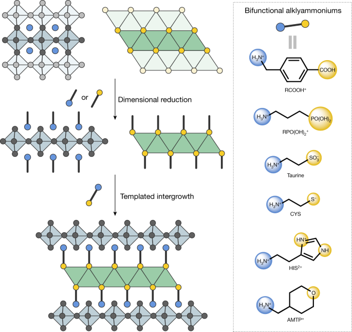Directed assembly of layered perovskite heterostructures as single crystals - Nature