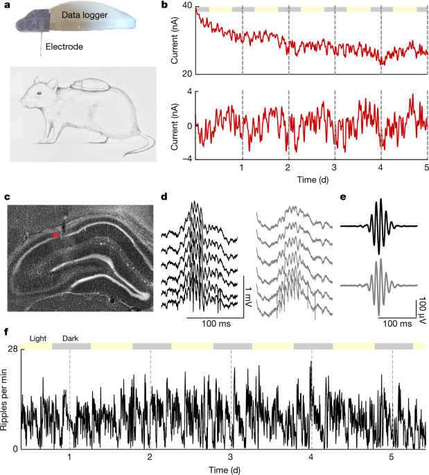 The hippocampus has previously been implicated in both cognitive and endocrine functions1,2,3,4,5,6,7,8,9,10,11,12,13,14,15. We simultaneously measure