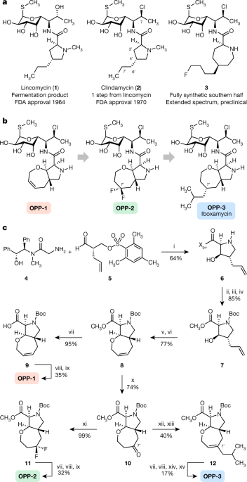A synthetic antibiotic class overcoming bacterial multidrug resistance - Nature