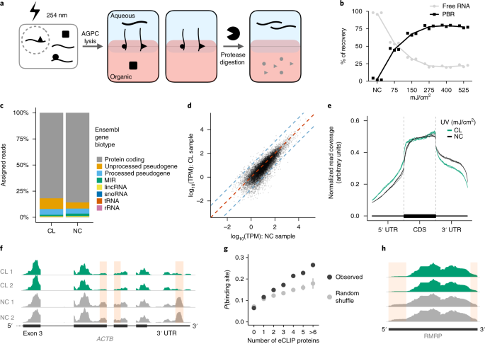 QnA VBage Comprehensive identification of RNA–protein interactions in any organism using orthogonal organic phase separation (OOPS)