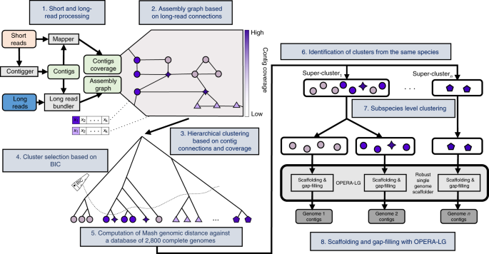 Hybrid metagenomic assembly enables high-resolution analysis of