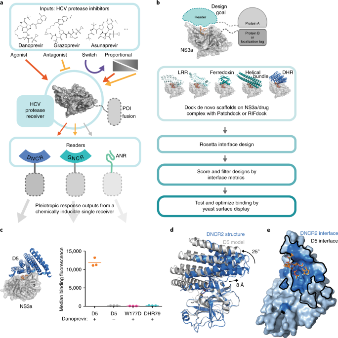 Multi Input Chemical Control Of Protein Dimerization For Programming Graded Cellular Responses Nature Biotechnology