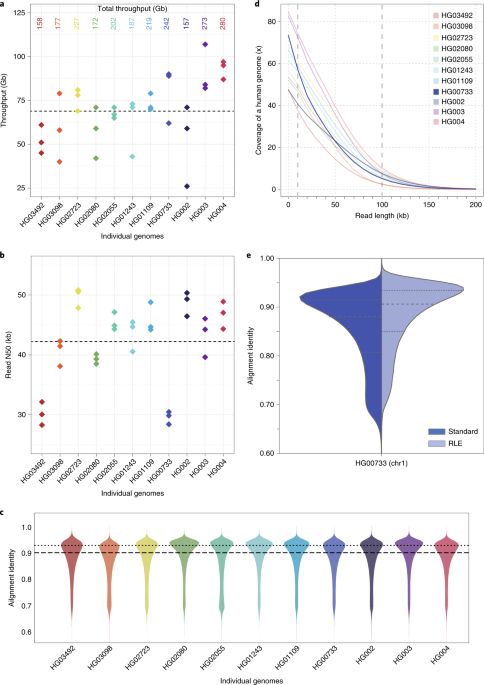 Nanopore sequencing and the Shasta toolkit enable efficient de novo assembly of eleven human genomes