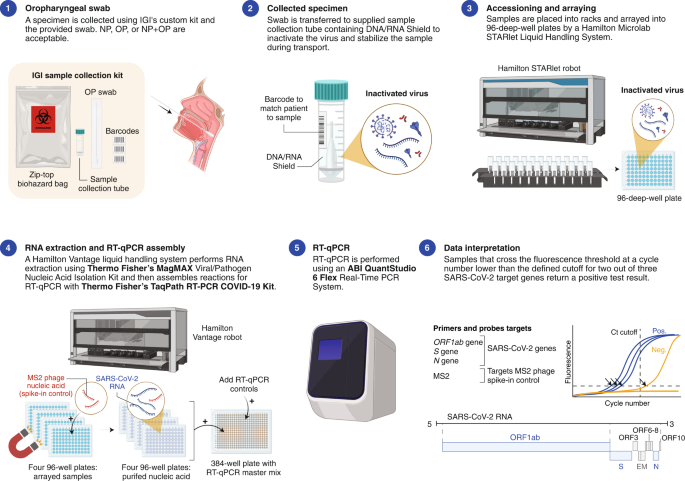 Blueprint for a pop-up SARS-CoV-2 testing lab - Nature Biotechnology