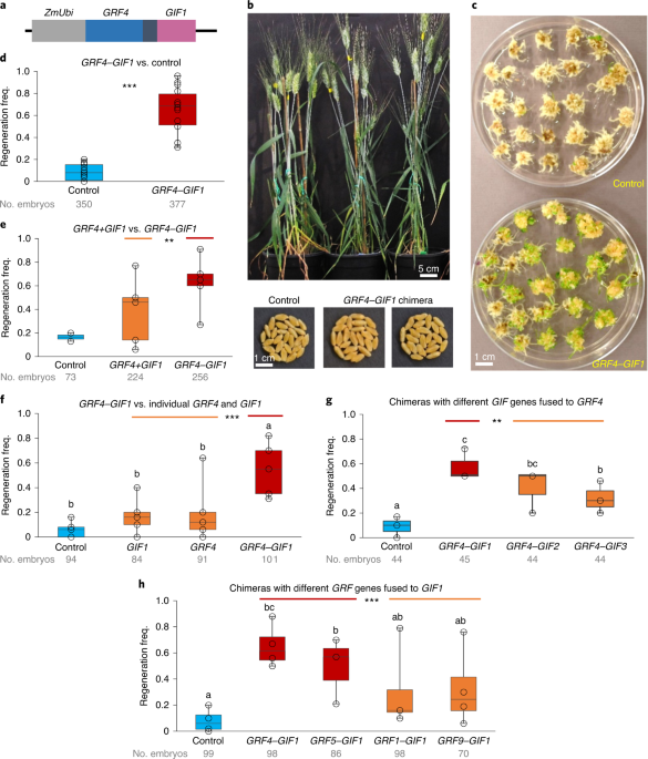 A GRF–GIF chimeric protein improves the regeneration efficiency of transgenic plants thumbnail
