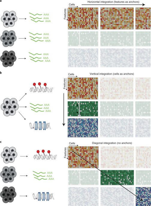 Computational principles and challenges in single-cell data integration thumbnail