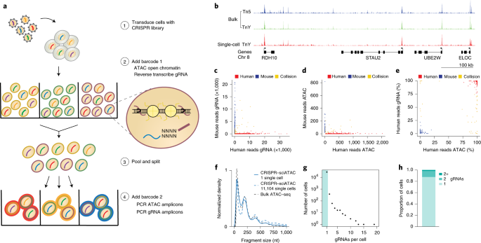 Profiling the genetic determinants of chromatin accessibility with scalable single-cell CRISPR screens thumbnail