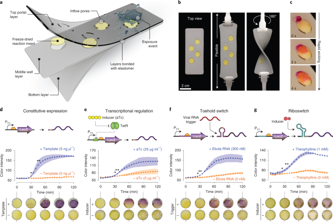 Wearable materials with embedded synthetic biology sensors for biomolecule detection