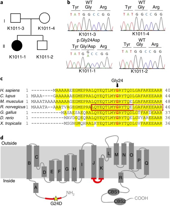 A Gain Of Function Mutation In The Clcn2 Chloride Channel Gene