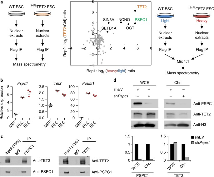 RNA-dependent chromatin targeting of TET2 for endogenous
