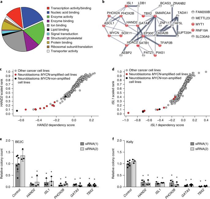 Selective Gene Dependencies In Mycn Amplified Neuroblastoma Include