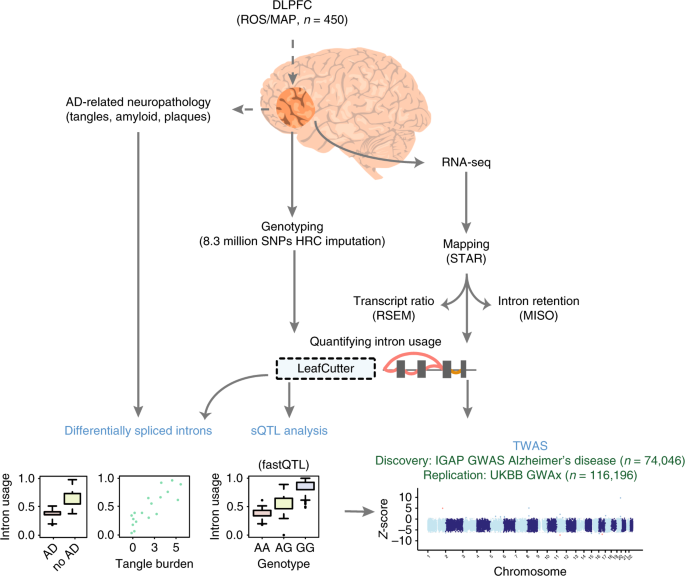 Integrative transcriptome analyses of the aging brain implicate altered splicing in Alzheimer's disease susceptibility