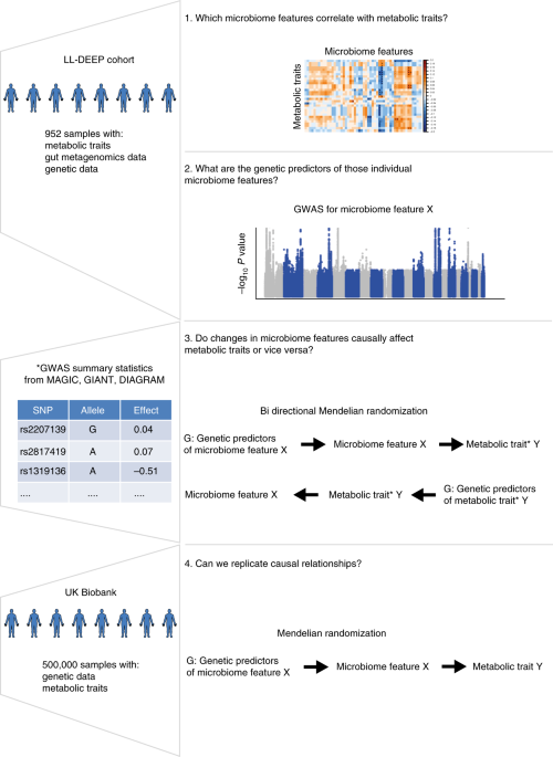 Causal relationships among the gut microbiome, short-chain fatty acids and metabolic diseases