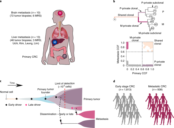 Quantitative Evidence For Early Metastatic Seeding In Colorectal Cancer Nature Genetics