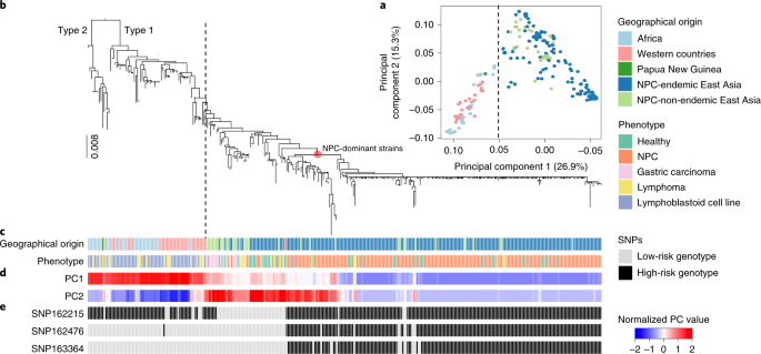 Genome sequencing analysis identifies Epstein–Barr virus subtypes associated with high risk of nasopharyngeal carcinoma