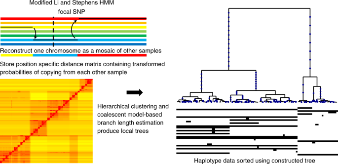A method for genome-wide genealogy estimation for thousands