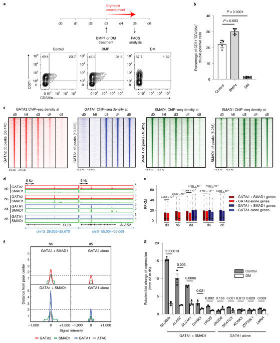 Common variants in signaling transcription-factor-binding sites drive phenotypic variability in red blood cell traits
