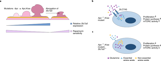 Exploiting KRAS-mediated metabolic reprogramming as a therapeutic target